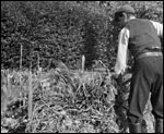 Main image of Making a Compost Heap (1941)