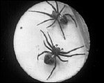 Main image of Spiders on a Web (1900)