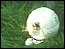 Thumbnail image of Glitterball, The (1977)