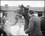 Main image of Topical Budget 228-1: Horses' New Years' Dinner  (1916)