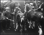 Main image of Topical Budget 79-2: Shire Horse Show (1913)