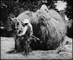 Main image of Day in the Hayfields, A (1904)