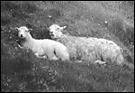 Main image of Experiment on the Welsh Hills, An (1932)