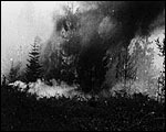 Main image of Topical Budget 167-1: Great Forest Fire (1914)