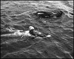 Main image of Topical Budget 729-1: Drama of Channel Swim (1925)