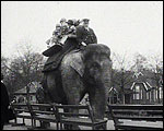Main image of Topical Budget 762-2: Spring Comes To The Zoo (1926)