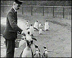 Main image of Topical Budget 847-2: The Penguin Trot (1927)