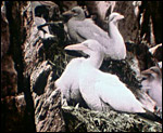 Main image of Glimpses of Bird Life (1910)