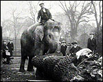Main image of Topical Budget 698-2: Elephant's Extra Trunk (1925)