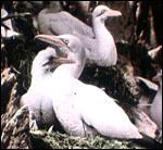 Main image of KS3 Science: Glimpses of Bird Life (1910)