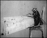 Main image of KS3 Science: Strength and Agility of Insects, The (1911)