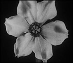Main image of Box of Delights: Birth of a Flower, The (1910)