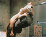 Main image of Creature Comforts (1989)