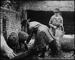 Main image of Topical Budget 247-2: Women Farm Workers (1916)