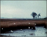 Main image of View (1970)