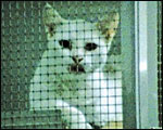 Main image of Animals Film, The (1981)