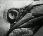 Main image of Private Life of the Gannets, The (1934)