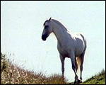 Main image of Moon Stallion, The (1978)