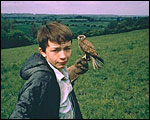 Main image of KS4 English: Kes (1969)