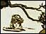 Thumbnail image of Oh'phelia (1919)