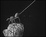 Main image of To Demonstrate How Spiders Fly (1909)