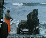 Main image of Seacoal (1985)