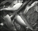 Main image of Seafood (1938)