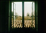 Main image of Windows (1974)